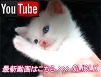 YouTube oddeye kitty